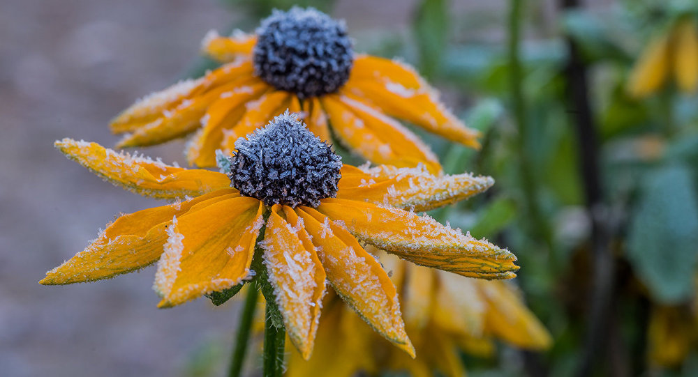 Вближайшие дни предполагается прохладная, сночными заморозками погода