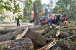 Старый тополь на площади Победы спилили за один день