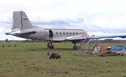 СПУТНИК_Медвежонок Мансур поселился на аэродроме под Тверью и подружился с лайкой