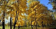 Восень
