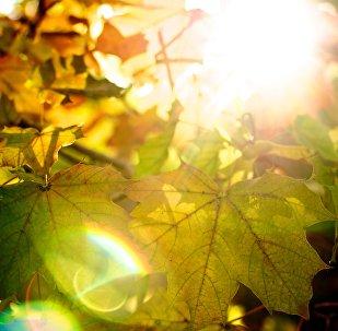 Деревья осенью