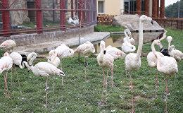 Отопительный сезон в Минском зоопарке: как животные готовятся к зиме