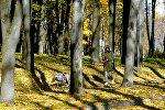 Восеньскі парк. Архіўнае фота