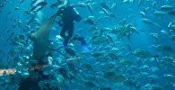 Дайвер у акіянарыуме, архіўнае фота