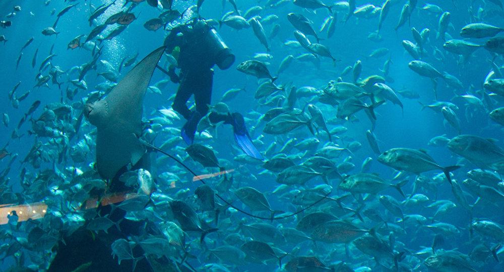 Немалый скат убил профессионального водолаза вокеанариуме