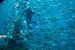 Дайвер в океанариуме, архивное фото
