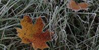 Восеньскія замаразкі