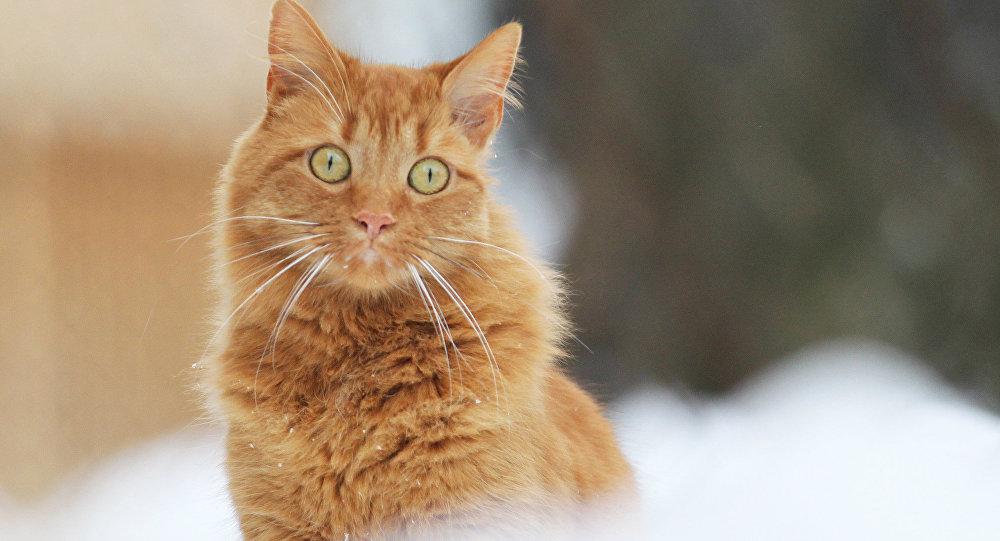 На текущей неделе  ожидается 1-ый  снег— Рябов