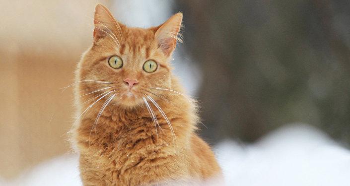 Кот і сняжынкі