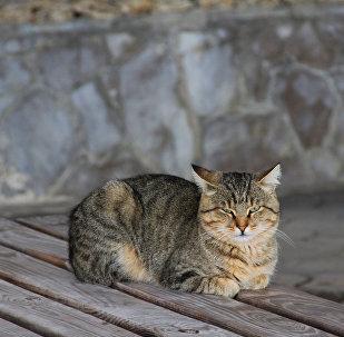 Кот на лежаке ялтинского побережья