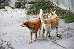Собаки охраняют территорию дома, архивное фото