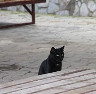 Чорны кот