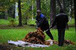 Уборка листвы в парке