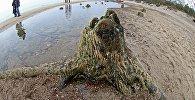 Рэшткі рэліктавых дрэваў на беразе Балтыйскага мора
