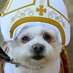 Собака в костюме Папы Римского на площади Томпкинс-сквер