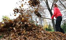 Женщина убирает листву в парке
