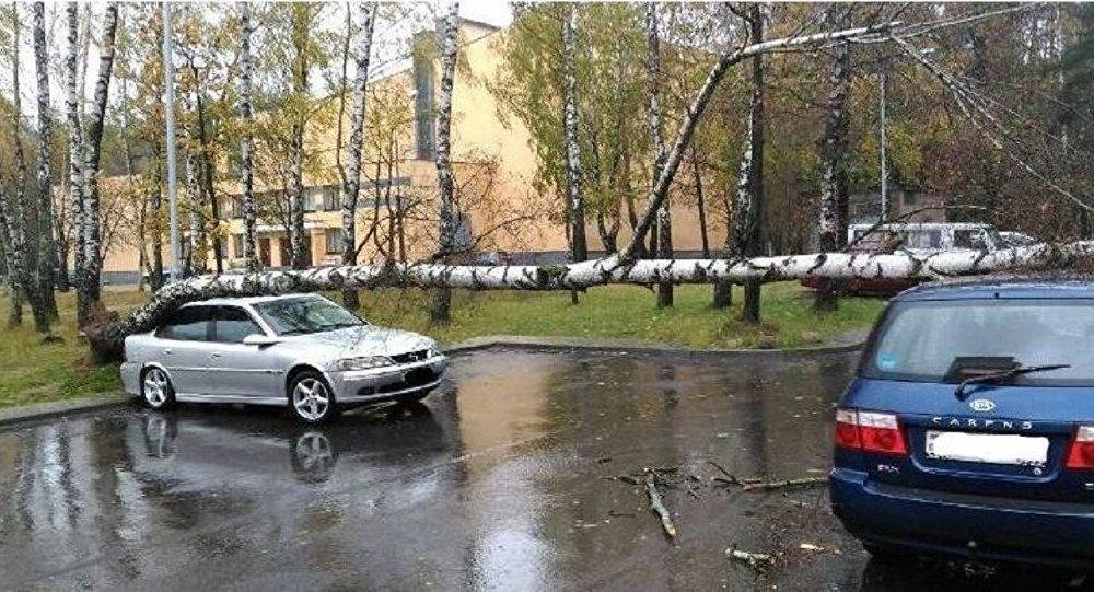 ВМинске ветер валит деревья, повреждено несколько авто — Оранжевый уровень опасности