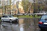 Поваленные ветром деревья в Минске