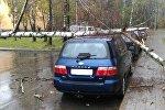 Поваленные деревья в Минске в октябре