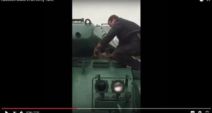Янот не пралез у Бульдог: як ратавалі жывёлу, якая захрасла ў танку