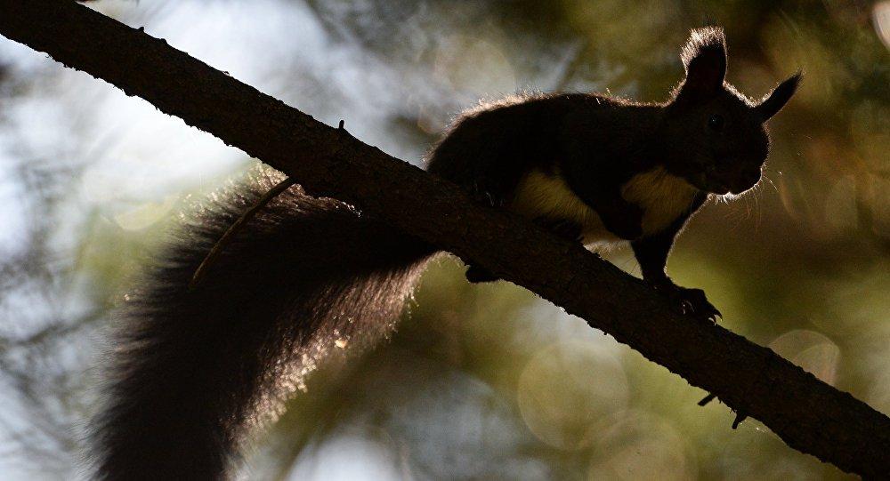 ВАлтайском крае открывается сезон охоты назайца илисицу