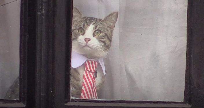 Кот из окна посольства Эквадора следил за репортерами во время допроса Ассанжа