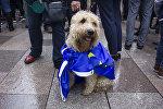 Собака на митинге против Brexit