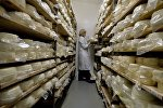 Производство сыров, архивное фото