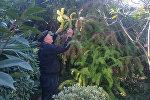 Азербайджанец сумел вырастить миллионы растений на 20 сотках