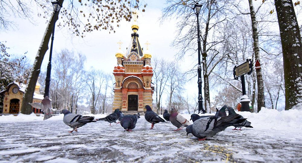 Галубы ў парку Гомеля