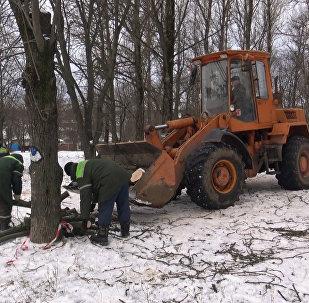 Зеленстрой пилит, жители протестуют – репортаж из сквера Котовка