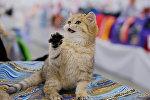 Выставка кошек Гран-при Royal Canin в Москве
