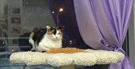Фестиваль КСТАТИ. Точки пересечения в минском Музее кота