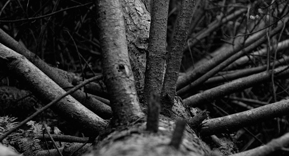 Мужчина умер при заготовке древесины вКобринском районе