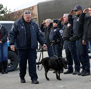 Офицеры Чикагской полиции провожают на эвтаназию полицейскую собаку Боба