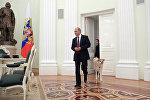 Президент РФ Владимир Путин с собакой Юмэ породы акита-ину перед началом интервью в Кремле телекомпании Ниппон и газете Иомиури