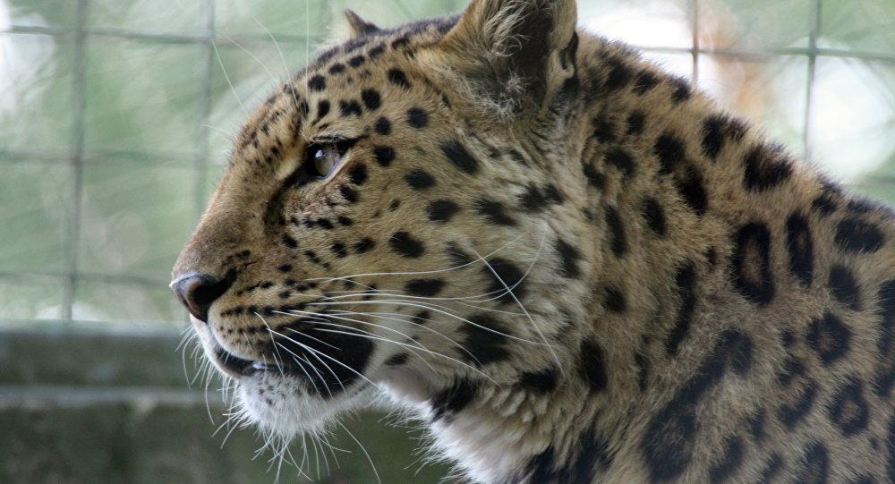 ВБоготоле вцирке-шапито наженщину набросился леопард