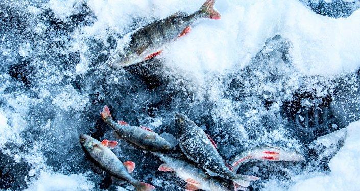 ВОстровецком районе спасли рыбака, провалившегося под лед