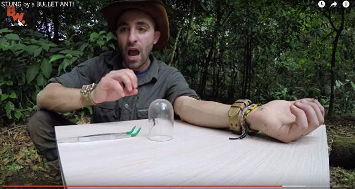 Экстремал испытал на себе самый болезненный укус насекомого