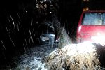 Упавшее на машины дерево