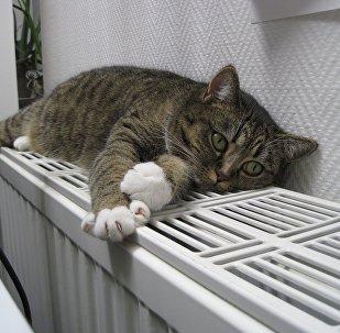 кот на батарэі
