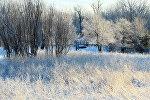 Иней зимой
