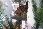 Петух на елке