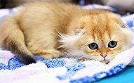 Кот, архіўнае фота