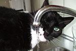 Кот  у ванным пакоі