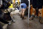 Акция В метро без штанов в Вене