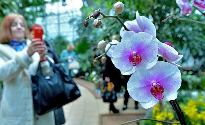 Посетители фотографируют редкие виды орхидей в минском Ботаническом саду