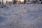 Иней на траве зимой