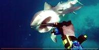 Відэа нападу акулы на дайвера