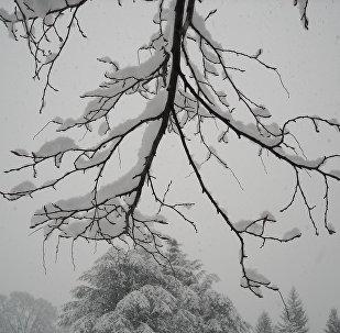 Снегопад, архивное фото